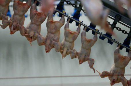 Suudi Arabistan, Türkiye'den hayvansal ürün ithalatını yasakladı